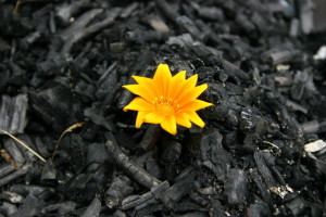 flower-among-the-ashes-01