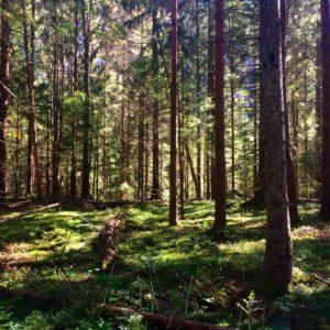 Trees in sweden